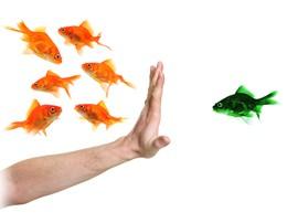 diferencia peces